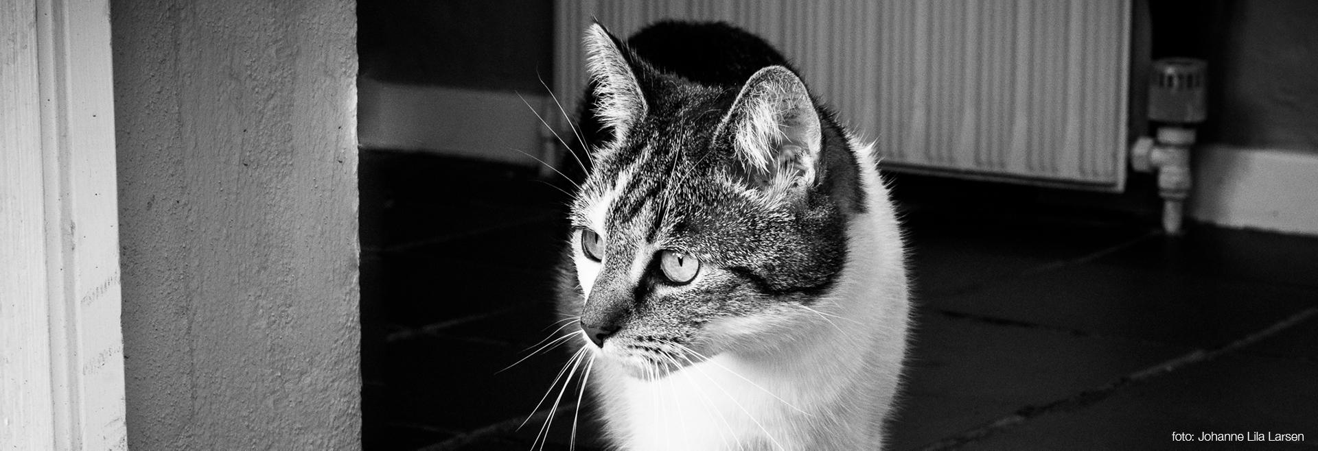 housesitting og feriepasning af hus og dyr